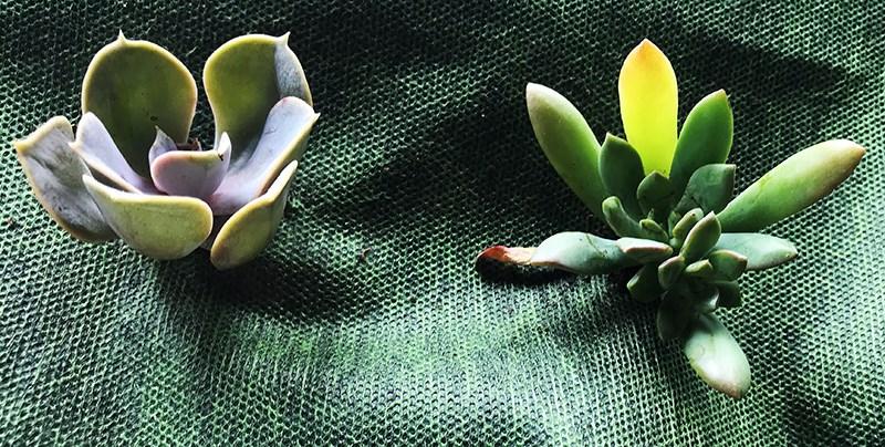 Synwin Non Wovens-News | professional garden non woven fabric munufacturer-1