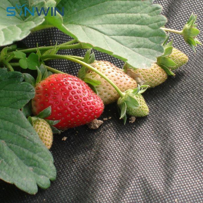 Spunbond Non Woven Ground Cover Weed Barrier Anti Uv Fabric