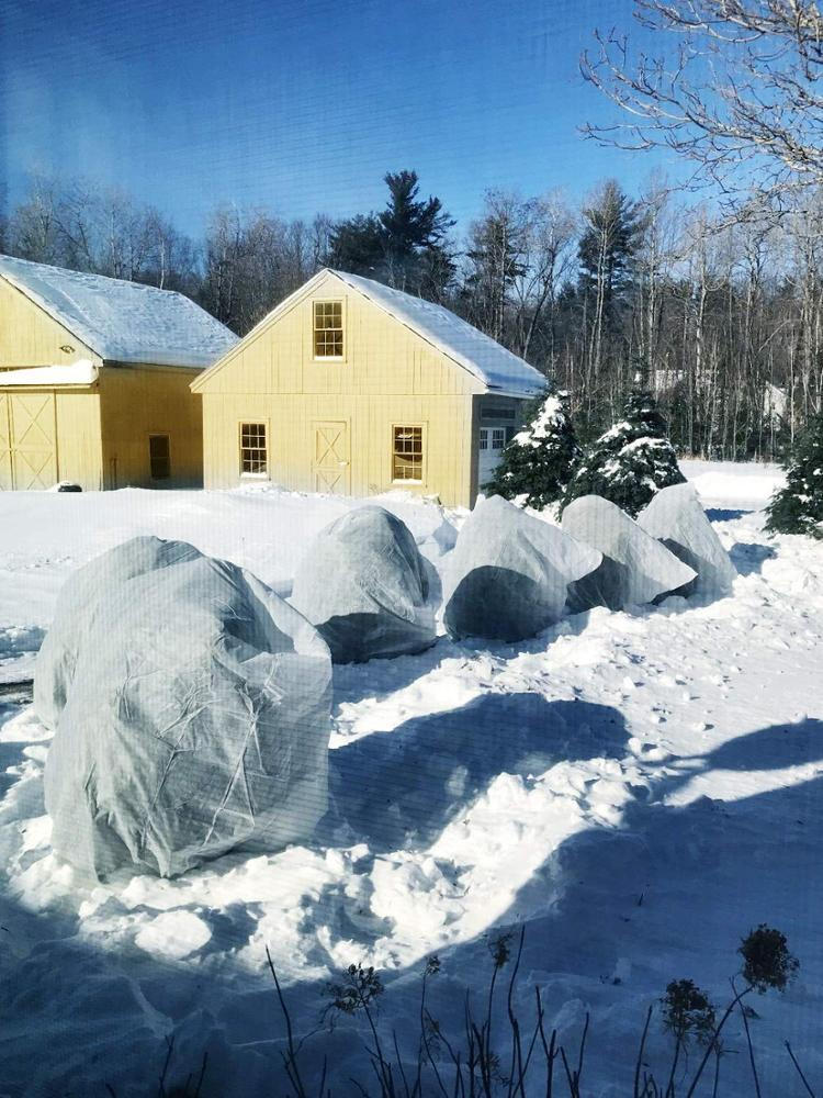 winter fleece for plants