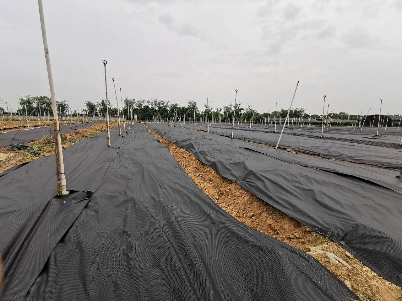 Anti UV PP Non Woven Material Roll Polypropylene Ground Cover Nonwoven Weed Control Fabric