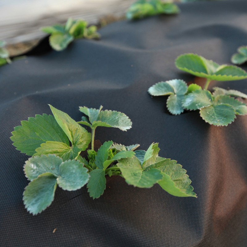 news-Application and service life of the PP non-woven weed barrier fabric-Synwin-img