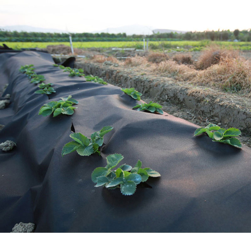 news-Synwin-Application and service life of the PP non-woven weed barrier fabric-img-1