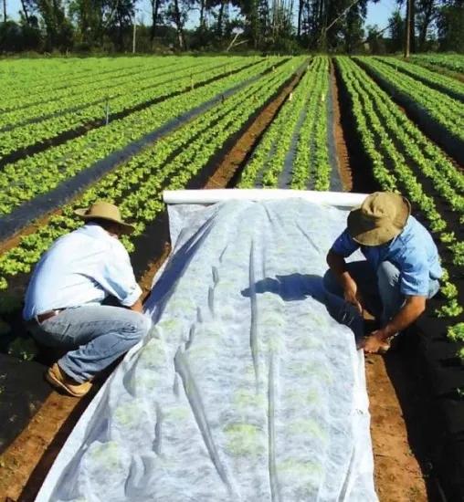 biodegradable pp non woven crop row cover vegetables plant nonwoven protection fleece garden non woven cover PP Non Woven Plant Cover